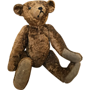 1900 Chocolate Borwn Bear