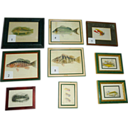 Antique Fish Lithographs 1900s