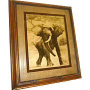 "Reverse Photo on Glass ""Elephant"" by Dennis Curry"