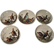 Five Johnson Bros Game Bird Butter Pats