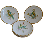 Antique 1860's Royal Worcester, England, Hand Painted Botanical Plates, Set of 5
