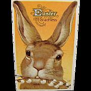 1917 Easter Postcard Big Brown Bunny Rabbit By Nash