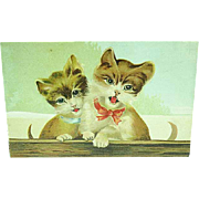 1909 Embossed ASB Postcard Of Kittens With Bow Tie