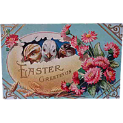 1911 Embossed Easter Postcard Chicks In An Egg