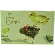 1909 Embossed Easter Postcard Baby Chicks One With Bow