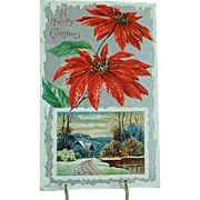 1909 Embossed Christmas Postcard Poinsettias Christmas Flower