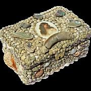 Vintage Shell Jewel Box With Porcelain Portrait Medallion