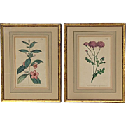 Pair Of 18th Century Hand Colored And Giltwood Framed Botanical Engravings, Dated 1793 & 1794
