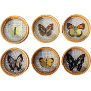 Set Of Six Bamboo And Butterfly Drink Coasters