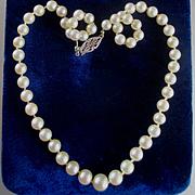Cultured Graduated  Pearls Choker Gold Filgree Clasp Original Velvet Box