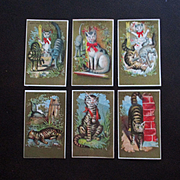 1881 Set Cat Victorian Cards By A.B. Seely