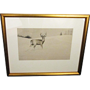A 20th Century American Sporting Drawing of a Deer by Kimball