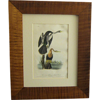 """A First Octavo Edition Hand Colored Lithograph of Audubon's """"American Anhinga - Snake Bird"""""""