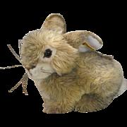 Steiff Dormy Rabbit Ready For Cuddles