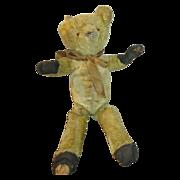 Antique Teddy Bear Seeks New Home