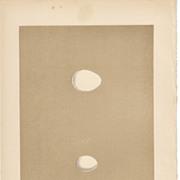 Egg Print- Woodpecker