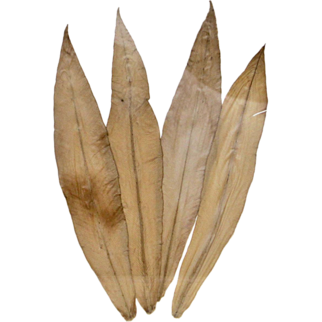 Ruffle Birds Nest Specimen