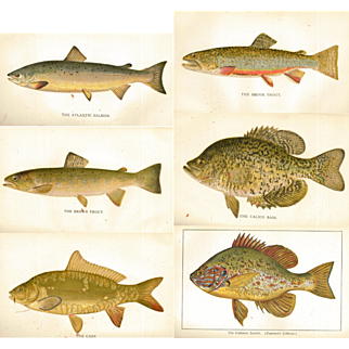 18 Early Denton Prints in Resale Condition - 1895 Penna. Fisheries Book