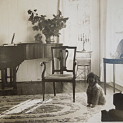 Vintage Photograph of A Poodle In Interior Room Setting With Piano