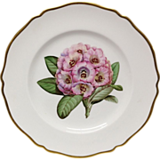 Beautiful Spode Rhododendron Y6638 Dinner Plate