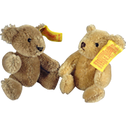 Pair of Miniature Steiff Bears with Button and Tags