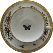 Dresden Porcelain Tea Cup and Saucer by Richard Klemm - Birds, Bugs, and Butterfly