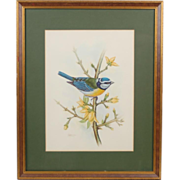 Vintage Finely Painted Watercolor Gouache Painting of Bluebird