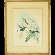 Gould & Richter Handcolored Lithograph Heliodoxa Jacula Hummingbirds c.1854
