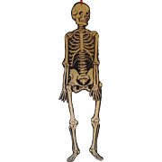 Vintage Beistle Folding Skeleton Circa 1940-1950s