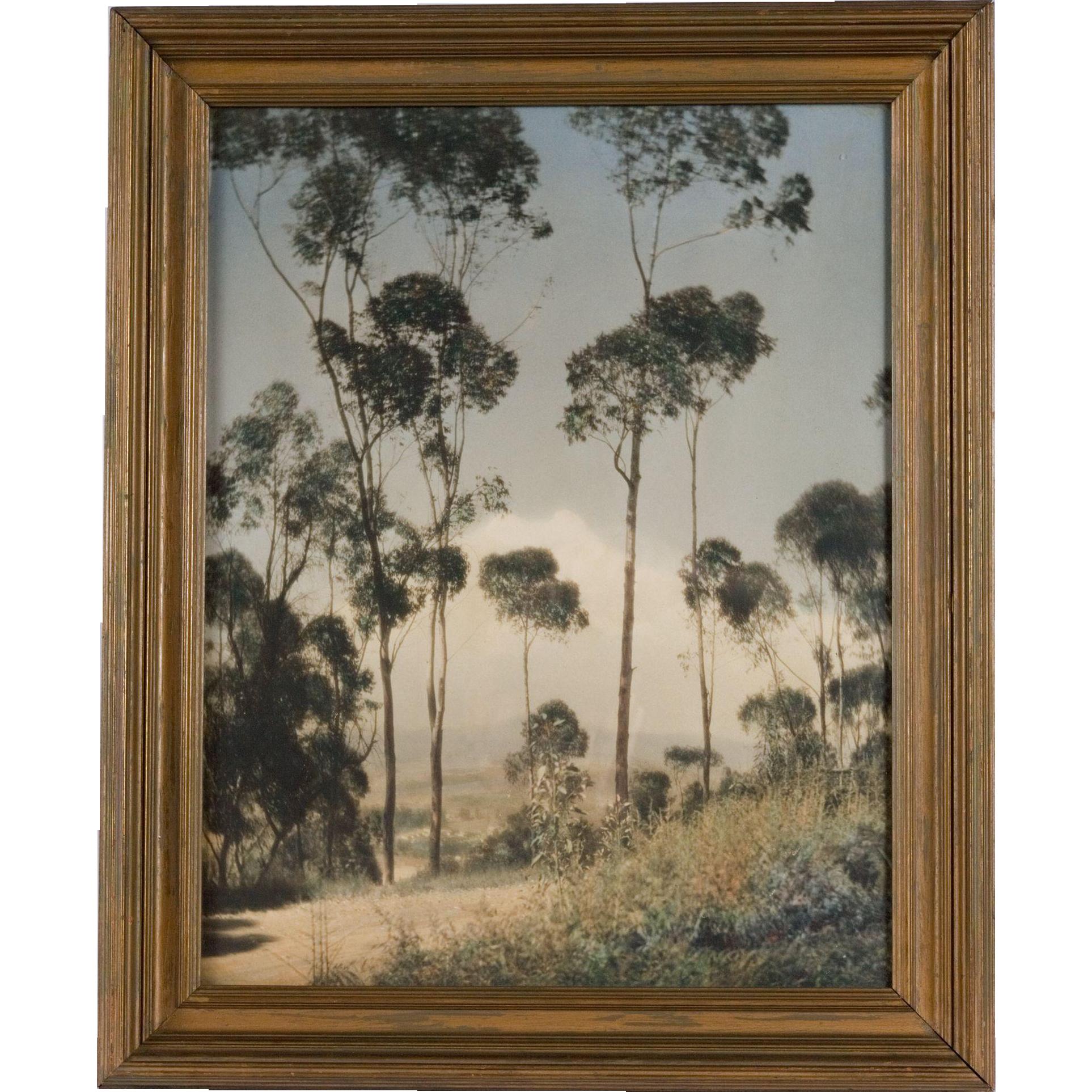 Arts and Crafts Hand-Tinted Photograph, Eucalyptus Grove, California, circa 1920's