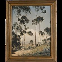 Original Leopold Hugo Arts and Crafts Hand-Tinted Photograph, Eucalyptus Grove, California, circa 1920's