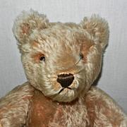 "Fantastic 15"" 1950's  Steiff Caramel Original Teddy Bear"