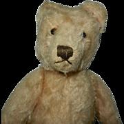 "13"" 1950's Light Gold Steiff Original Teddy Bear"