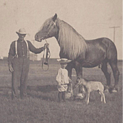 Photograph Grandpa and His Stallion and Grandson with Colt