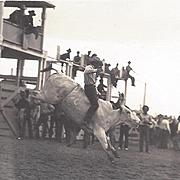 RPPC Doubleday Rodeo Steer Riding