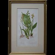 Pair of Framed Vintage Botanical Prints