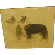 1920-30s Original Etching of Collies by Bert Cobb from Gump's San Francisco