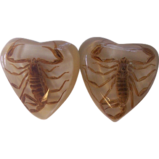 Vintage Scorpion Insect Earrings in Lucite