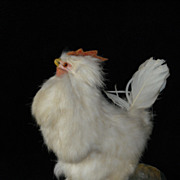 Antique Chicken With Egg Laying Mechanism