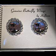 Genuine Butterfly Wings by Hoffman Vintage Clip Earrings in Original Box NOS