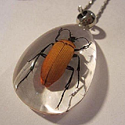 Amazing Real Insect Bug Thick Lucite Teardrop Vintage Pendant Necklace