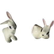 Two Little Darling White Miniature Rabbits