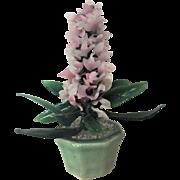 RARE Hyacinth Oriental Chinese Jade Tree Bonsai Tree GEMSTONES