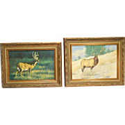 2 Original Peter Darro Wildlife Paintings Elk & White Tail Deer