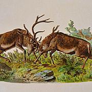 Fighting Stag Deer, Large Victorian Die Cut  #230