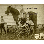 2 Early Stereoviews 1880s Children with Horses, Kid & Dog in Carriage, Riding Toy Horse