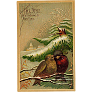 Winter Robins Snuggle Under Snowy Bough, Large Victorian Trade Card #20