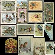 1880s Bird Themed Cards, De La Rue, Hildesheimer, Holly, Cherub 14 pcs
