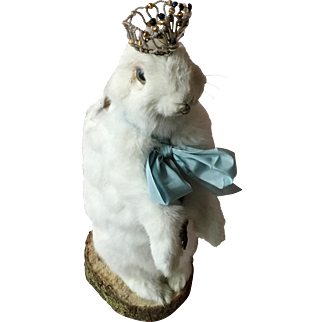 Vintage White Taxidermy Rabbit with ribbon and crown