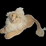 Small Glass Eyed Lion Fur Mane c1930
